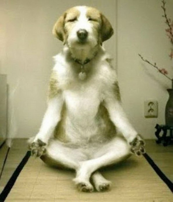 meditation+dogs+do+it+too_99a07b_3753826